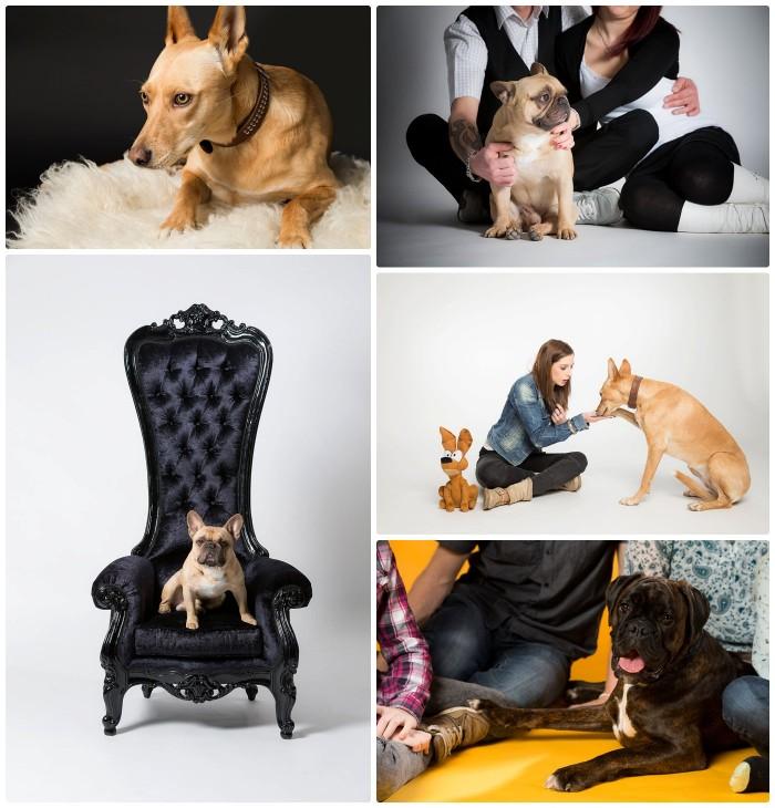 Hunde - Hundefotografie im Fotostudio